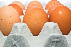 Dutzend frische braune Eier einer Henne Lizenzfreies Stockfoto
