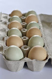 Dutzend Grün und natürliche Eier Browns Lizenzfreies Stockfoto