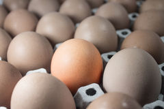 Dutzend von Eiern Lizenzfreie Stockfotos