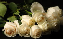 Dutzend weiße Rosen Stockfotos