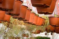 Dutzende des braunen Plastikblumentopfs mit Blumen, die, in den Reihen in einem sonnigen Gewächshaus schon zu blühen haben Lizenzfreie Stockfotografie