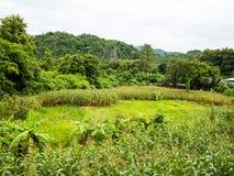 Duurzaam Graangebied, Chiang Mai royalty-vrije stock afbeelding