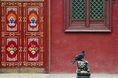 Duva - Mongoliet royaltyfri foto