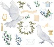 Duva och olivgrön duva för fred för fluga för fågel för vattenfärg för gemkonst digital dra för att gifta sig berömillustrationen stock illustrationer