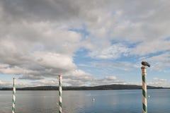 Duva perched på hamnpol Arkivfoton