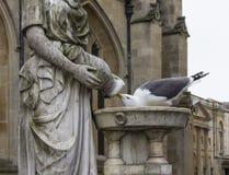 Duva som dricker från en skulpturspringbrunn Royaltyfri Fotografi