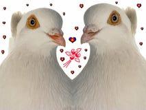 duvabröllop Fotografering för Bildbyråer