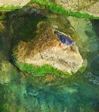 Duvadricksvatten från stenen Arkivfoto