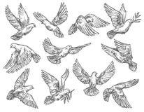 Duvaflyget med den olivgröna filialen, vektor skissar royaltyfri illustrationer