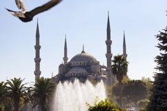 Duvan flyger i oskarp rörelse in mot den blåa Sultanahmet moskén arkivfoto