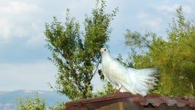 duvan sitter på taket royaltyfri foto