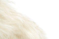 Duvet animal Photo stock