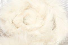 Duvet animal Photographie stock