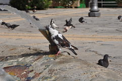 Duvor i Cypern Royaltyfri Fotografi