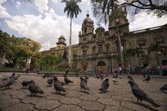Duvor i den San Ignacio plazaen Medellin Colombia Royaltyfria Bilder