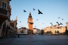 Duvor i morgonen Krakow Arkivfoton