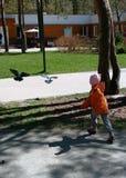 Duvor i parken Arkivfoton