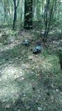Duvor i parken Royaltyfria Foton