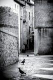 Duvor i Provence Royaltyfri Foto