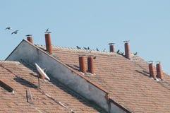 Duvor på ett hustak Royaltyfri Foto