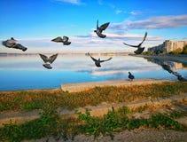Duvor på kusten av den soliga morgonen för sjö royaltyfri bild
