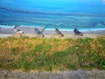 Duvor på kusten av sjön royaltyfri fotografi