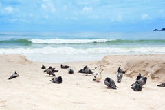 Duvor på stranden Royaltyfri Fotografi