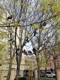 Duvor sitter i staden parkerar arkivfoton