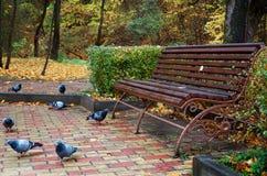 Duvor sitter nära en parkerabänk Royaltyfri Bild