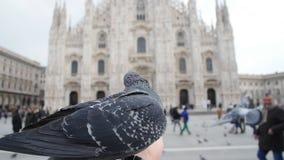 Duvor som äter från händer på bakgrunden av duomoen i Milan arkivfilmer