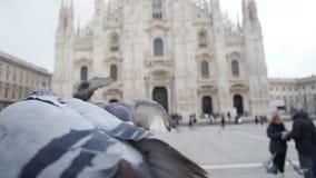 Duvor som äter från händer på bakgrunden av duomoen i Milan lager videofilmer