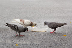 Duvor som äter mat på en gata Royaltyfri Fotografi