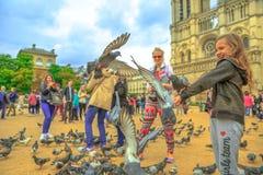 Duvor som äter på Notre Dame royaltyfri fotografi