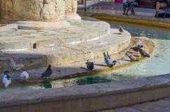 Duvor som dricker och har bad i en stadsspringbrunn på en varm sommardag arkivfoto