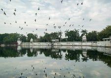 Duvor som flyger över sjön royaltyfria bilder