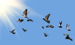Duvor som flyger till solen Royaltyfri Fotografi
