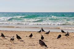 Duvor som går på sanden bredvid havet Royaltyfria Foton