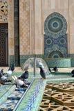 Duvor som spelar med vatten i en moskés springbrunn (ståenderiktningen) royaltyfri bild
