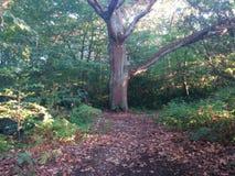 Duży masywny drzewo Zdjęcia Royalty Free