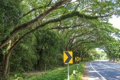 Duzi drzewa obok Koszowej drogi z Drogowym znakiem, Obraz Royalty Free
