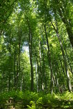 Duzi drzewa Obraz Royalty Free