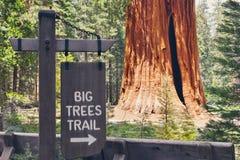 Duzi drzewa Wlec sekwoi & królewiątko jaru parki narodowych, Kalifornia usa - wycieczkujący znaka - zdjęcia stock