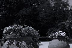 Duzi garnki kwiaty w egzota ogródzie fotografia royalty free