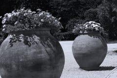 Duzi garnki kwiaty w egzota ogródzie zdjęcie stock