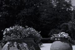 Duzi garnki kwiaty w egzota ogródzie zdjęcie royalty free