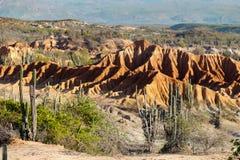 Duzi kaktusy w czerwieni pustyni, tatacoa pustynia, Colombia, łaciński Amer Obrazy Stock