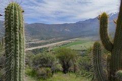 Duzi kaktusy w górach fotografia stock
