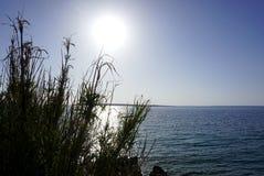 Duzi liście trzcinowej trawy Phragmites na dennym wybrzeżu blisko morza ukazują się z dużym słońcem na niebieskim niebie w tle wy Zdjęcia Stock