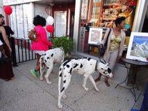 Duzi psy przy festiwalem Zdjęcia Stock