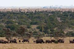 Duzi stada Afryka Krajobraz z bizonem Nakuru, Afryka Zdjęcia Stock